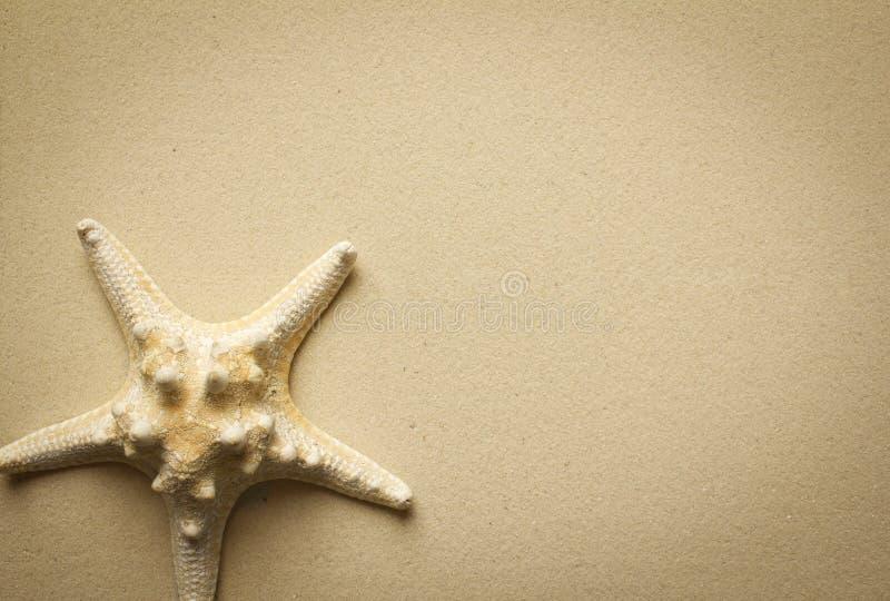Stelle marine su una sabbia fotografia stock libera da diritti