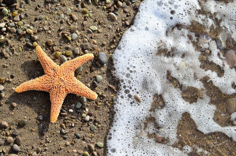 Stelle marine sul disegno del bordo della sabbia fotografia stock libera da diritti