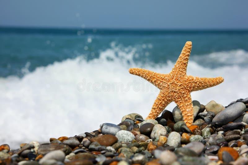 Stelle marine sul litorale di pietra fotografie stock libere da diritti