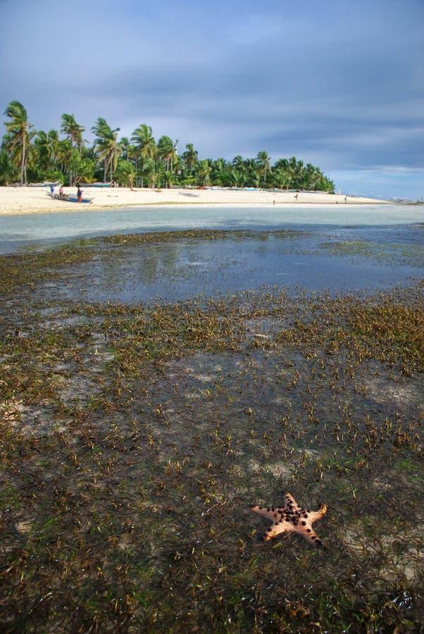 Stelle marine sull'isola di Malapascua fotografia stock