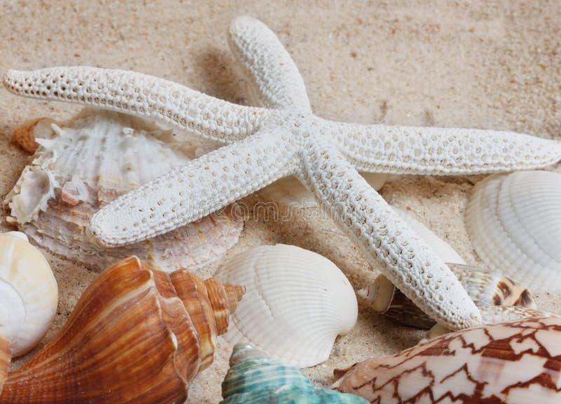 Stelle marine sulla sabbia fotografia stock