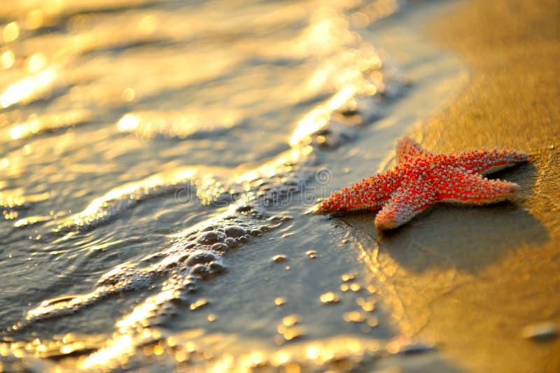 Stelle marine sulla sabbia bagnata immagine stock