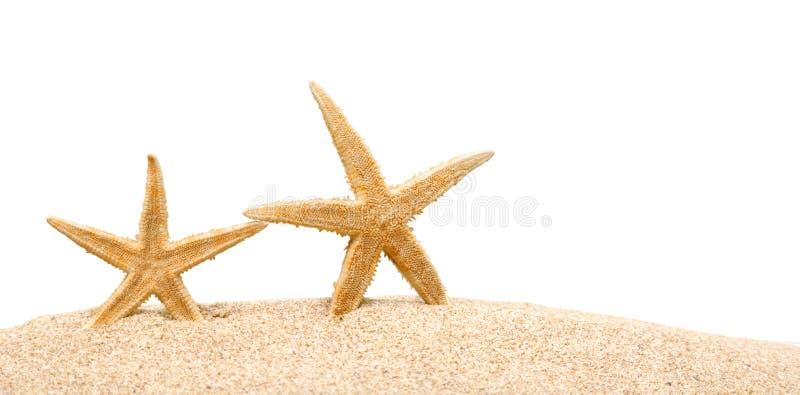 Download Stelle Marine Sulla Sabbia Della Spiaggia Fine In Su Fotografia Stock - Immagine di vacanza, ricorso: 117979438