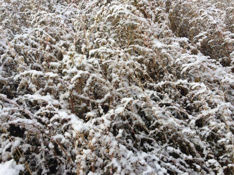 Stellen Sie auf dem alten trockenen Gras dar stockbild