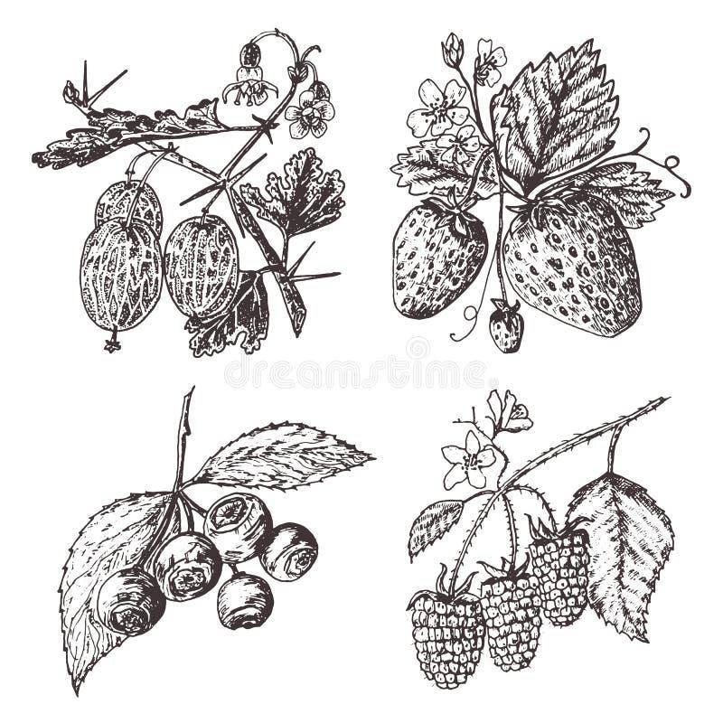 stellen Sie Beeren ein Himbeere, Blaubeere, Erdbeere, Stachelbeere gravierte Hand gezeichnet in alte Skizze, Weinleseart feiertag vektor abbildung
