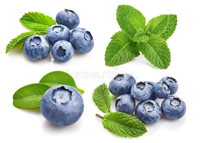 Stellen Sie Beerenblaubeere mit Blattminze ein fruchtig stockfotos