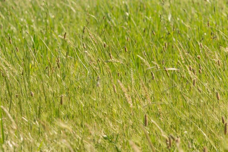 Stellen Sie Gras auf lizenzfreie stockfotografie