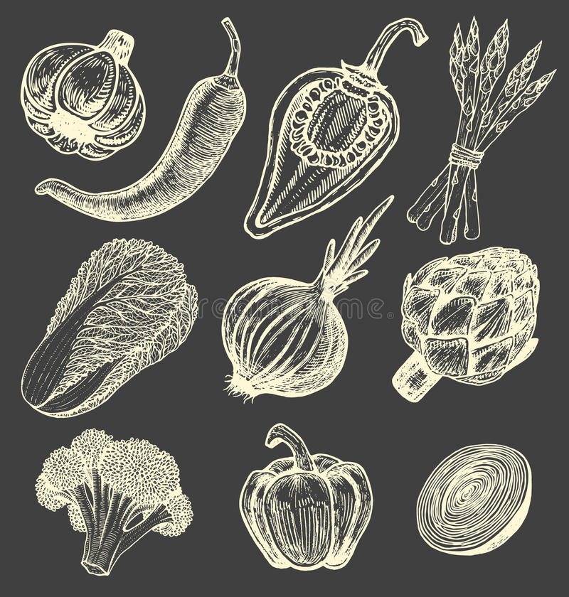 Stellen Sie Hand gezeichnete Elemente mit Frischgemüse der Skizzenart ein Verschiedene Pfeffer Artischocke und Spargel Blumenkohl stock abbildung