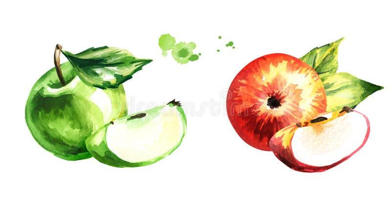 Stellen Sie mit den roten und grünen Äpfeln ein Übergeben Sie die gezogene Aquarellillustration, lokalisiert auf weißem Hintergru vektor abbildung