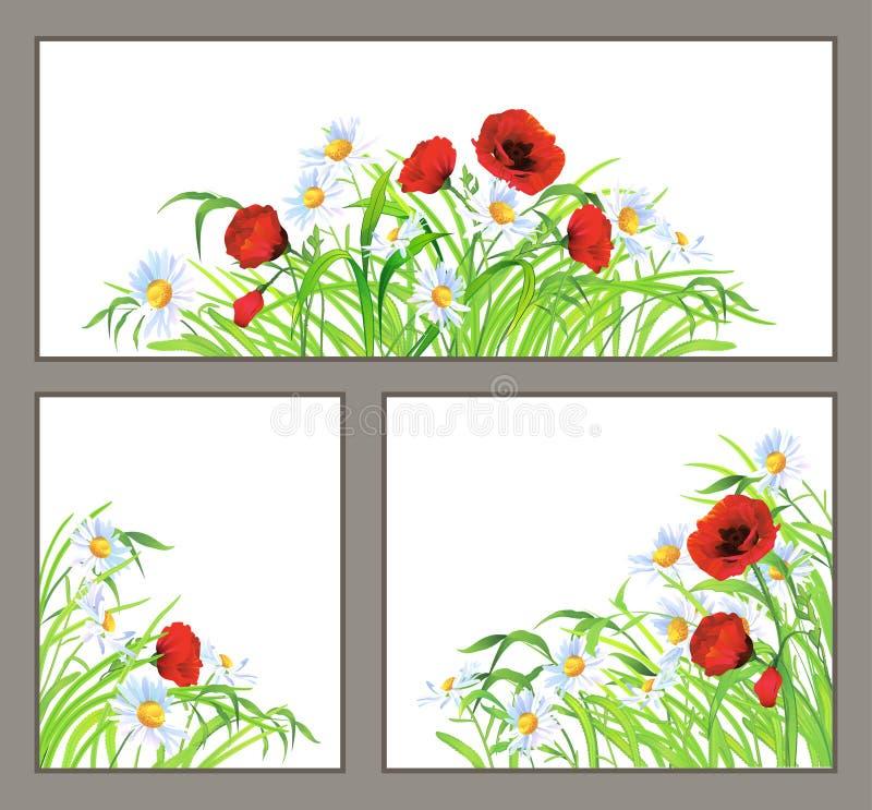 Stellen Sie Sommerblumenmohnblume, das Gänseblümchen ein, das auf Weiß getrennt wird vektor abbildung
