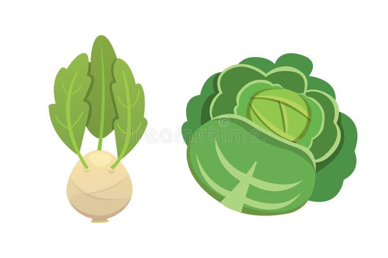 Stellen Sie Vektor Kohl und Kopfsalat ein Grüner Gemüsekohlrabi, andere verschiedene Kohlpflanzen lizenzfreie abbildung