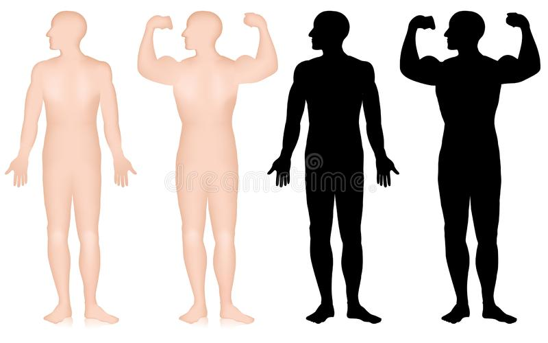 Stellen Sie vom männlichen Bodybuilderschattenbild ein, Bizeps aufwerfen lokalisiert auf weißem Hintergrund vektor abbildung