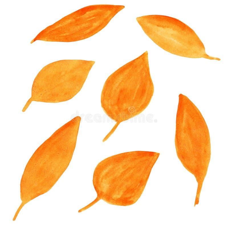Stellen Sie vom unterschiedlichen geformten orange Herbstlaub ein Helles Ingwerbaumlaub lizenzfreie abbildung
