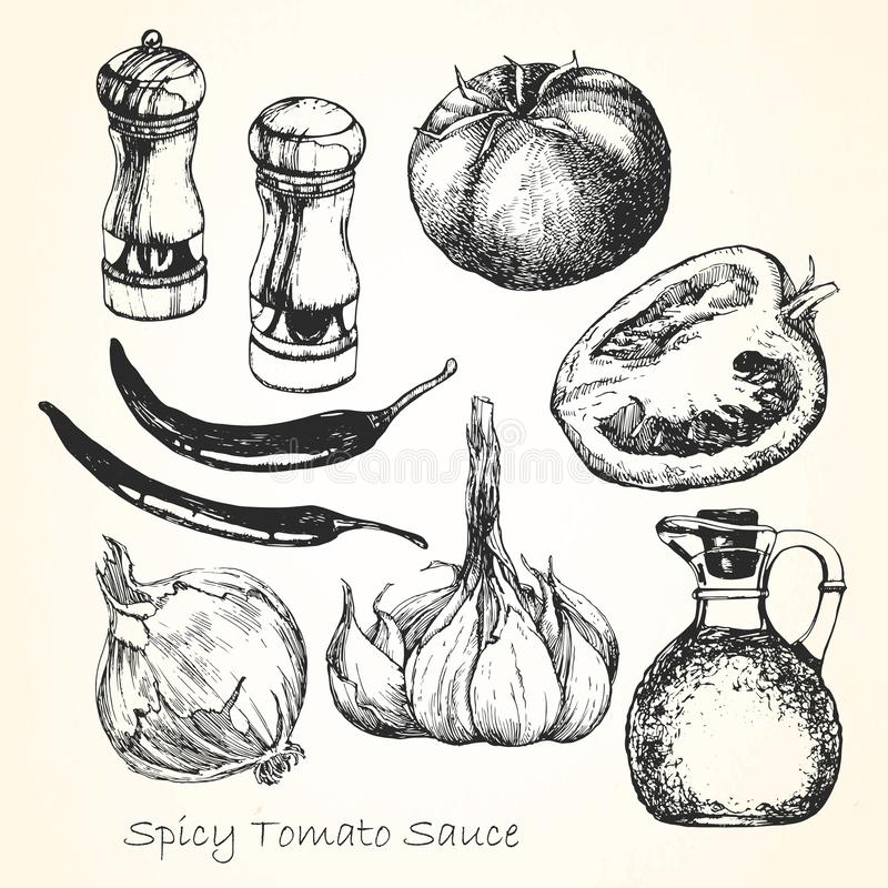 Stellen Sie von den Bestandteilen für eine würzige Tomatensauce ein Von Hand gezeichnet Gesicht der illustration Vektor vektor abbildung
