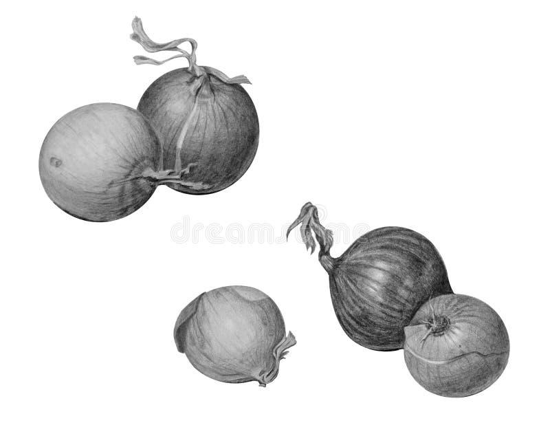Stellen Sie von den Birnenzwiebeln ein, die auf Weiß lokalisiert werden stockfotografie