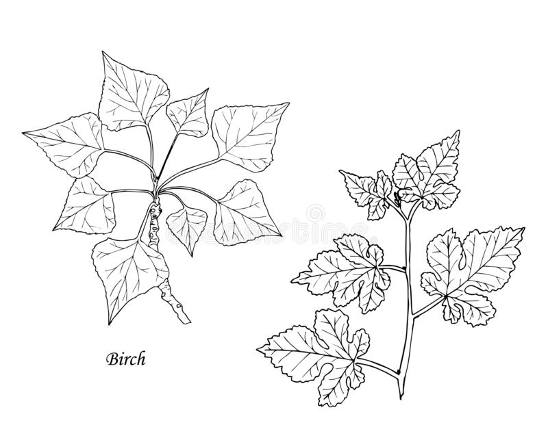 Stellen Sie von den botanischen leathes ein Hand gezeichnet stock abbildung