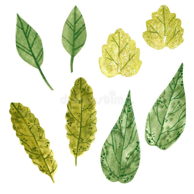 Stellen Sie von den Niederlassungen mit grünen Blättern, Kraut, Handgezogenes Aquarell ein vektor abbildung