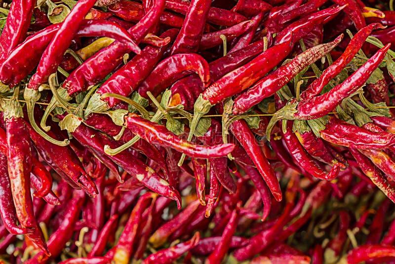 Stellen Sie von den scharfen trockenen Hülsen von Pfeffern des roten Paprikas viel Früchte horiz ein stockbilder