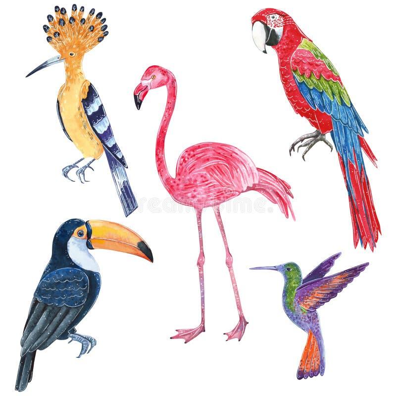 Stellen Sie von den tropischen wilden Vögeln ein Tukan, Hoopoe, colibri, Aronstäbe Papagei, Flamingo stock abbildung
