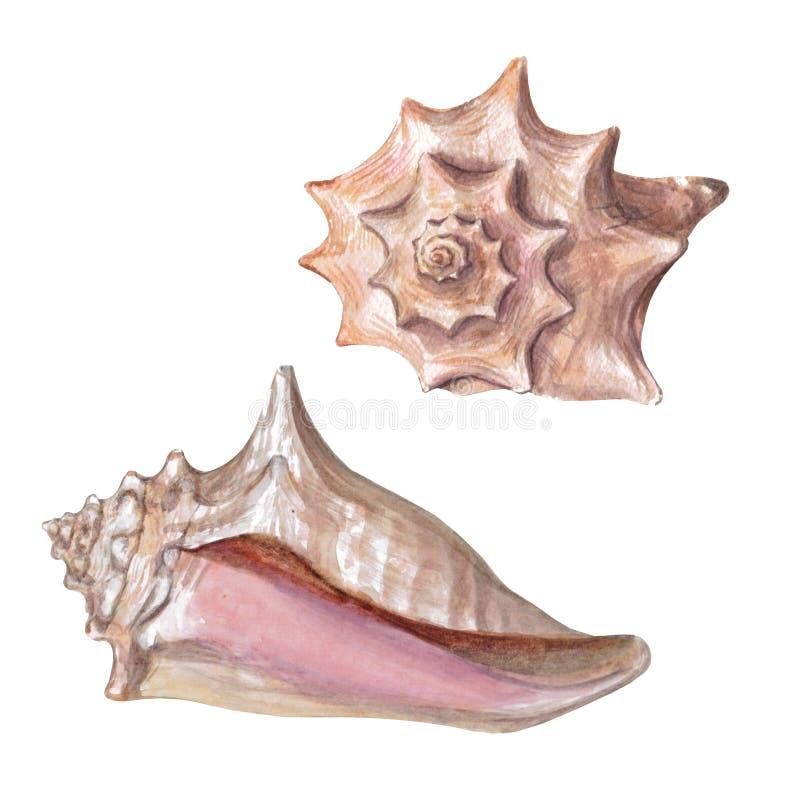 Stellen Sie von den verschiedenen bunten Muscheln ein, die auf einem weißen Hintergrund lokalisiert werden Schöne Aquarellillustr stock abbildung