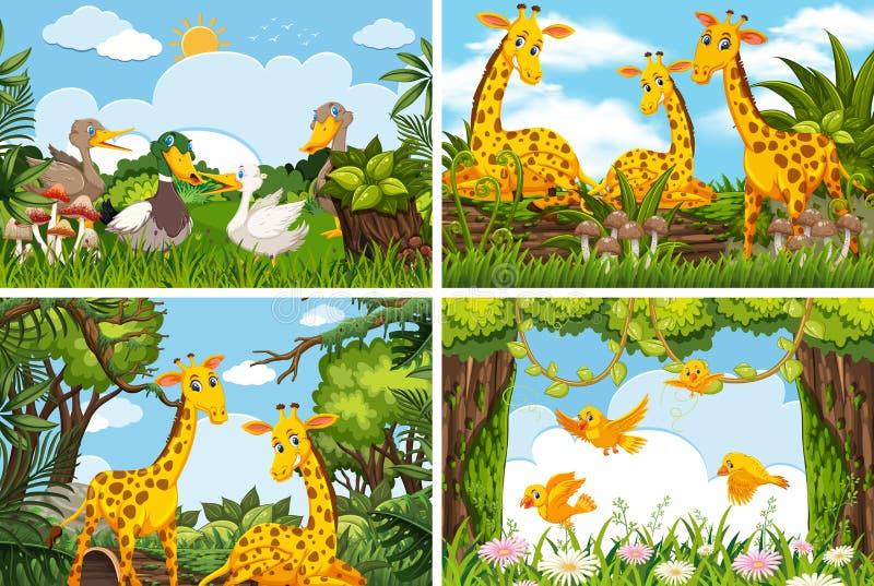 Stellen Sie von den verschiedenen Tieren in den Naturszenen ein stock abbildung