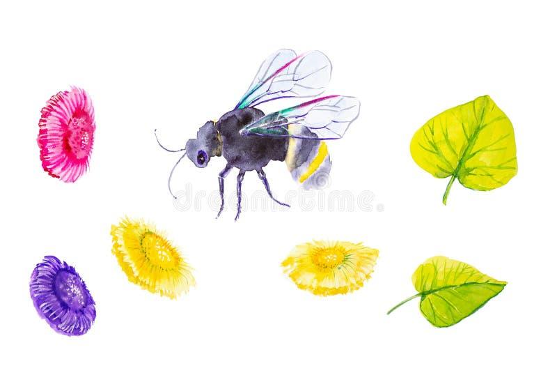 Stellen Sie von der Grundhummel, von den Gänseblümchen und von den grünen Blättern ein Aquarellillustration lokalisiert auf weiße stockbilder