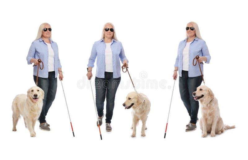 Stellen Sie von der reifen blinden Frau mit langem Stock und Hund auf Weiß ein lizenzfreies stockbild