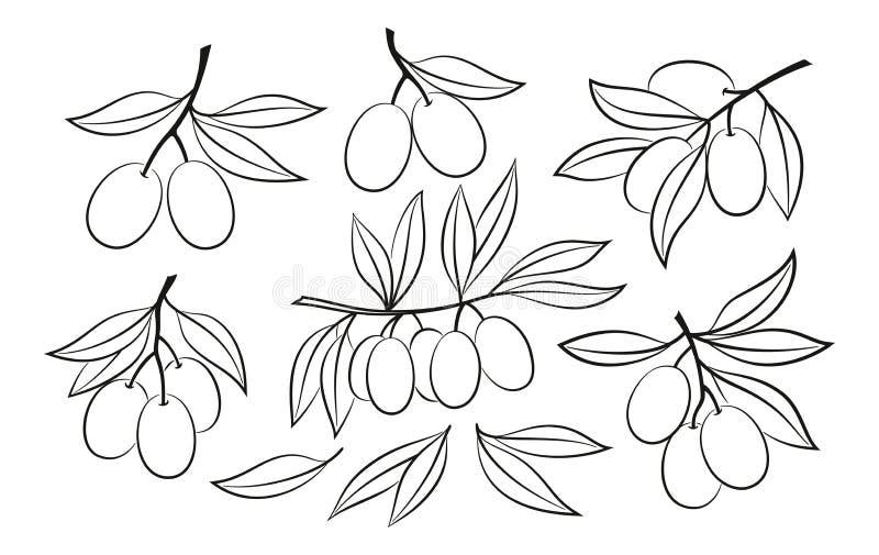 Stellen Sie von Olive Pictograms ein stock abbildung
