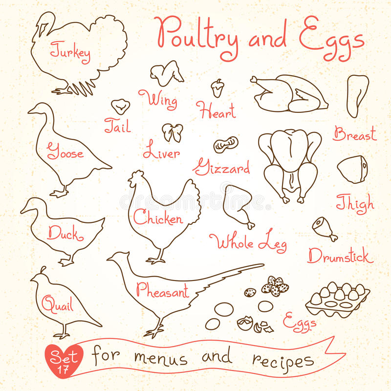 Stellen Sie Zeichnungen des Geflügels und des Eies für Designmenüs, Rezepte ein Geflügelfleischhuhn, Truthahn, Gans, Ente, Wachte lizenzfreie abbildung