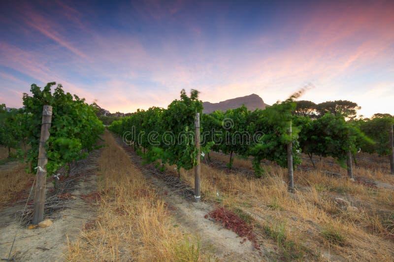 Stellenbosch, сердце зоны вина растущей в южном Afri стоковое изображение rf