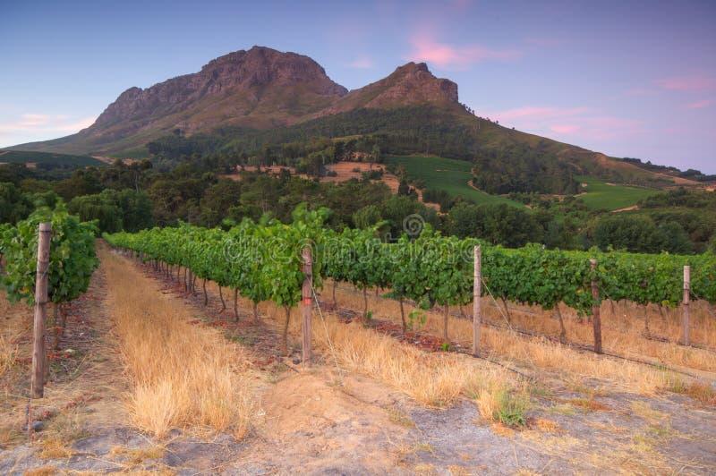 Stellenbosch, сердце зоны вина растущей в южном Afri стоковые изображения rf