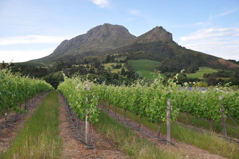 Stellenbosch halny winelands Przylądek   zdjęcie stock