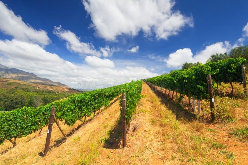 Stellenbosch, het hart van het wijnbouwgebied in Zuiden Afri royalty-vrije stock afbeeldingen