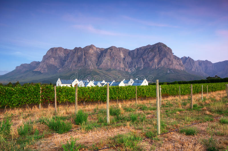 Stellenbosch, o coração da região de crescimento de vinho em Afri sul foto de stock