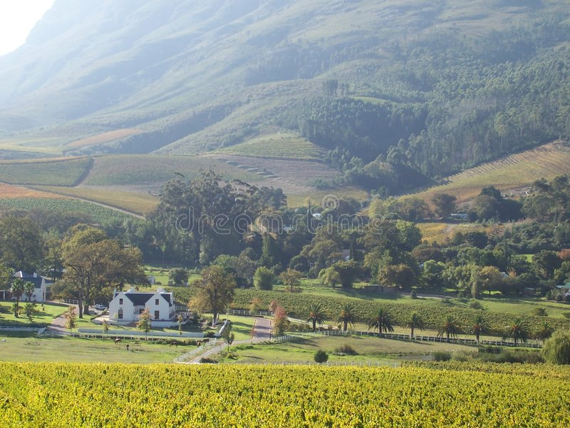 Stellenbosch S.A del viñedo del cabo imagen de archivo