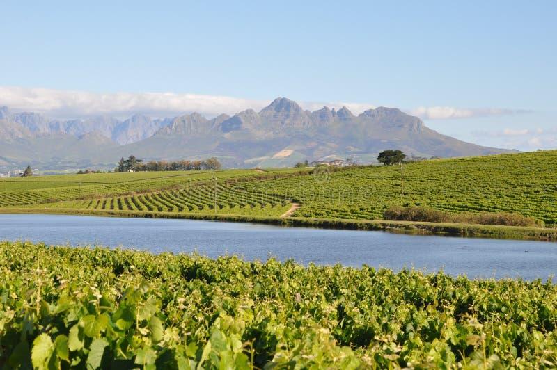 Stellenbosch winelands south africa royalty free stock photography
