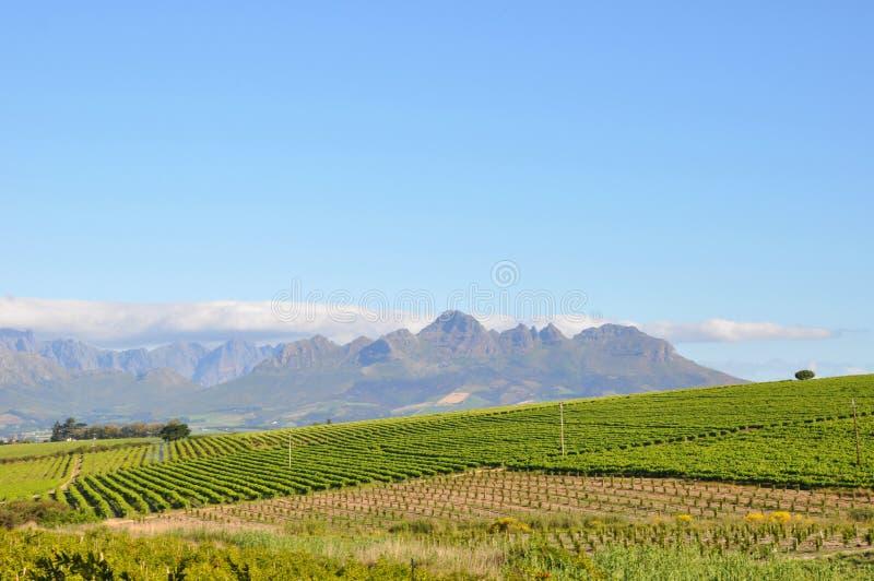 Stellenbosch panorama south africa royalty free stock photos