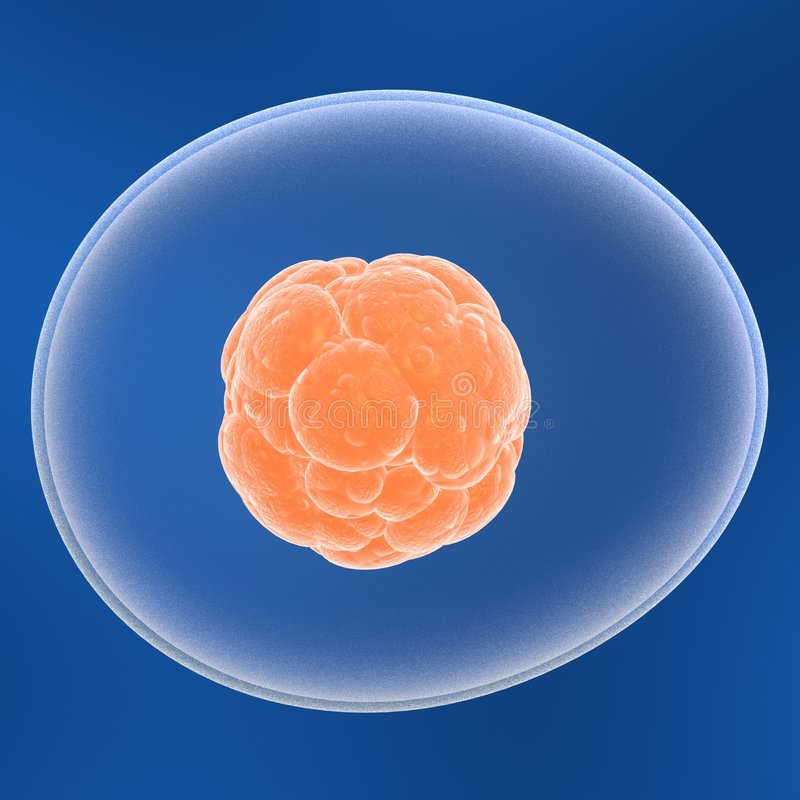 Free Stem Cell Royalty Free Stock Photography - 1386647