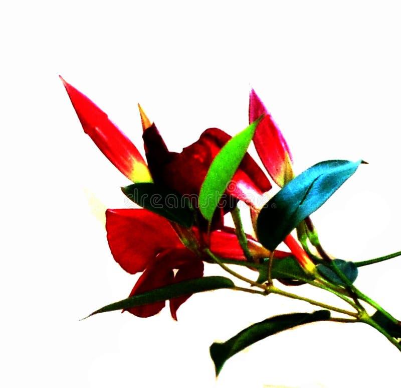 Stem Flower Color 22 Free Public Domain Cc0 Image