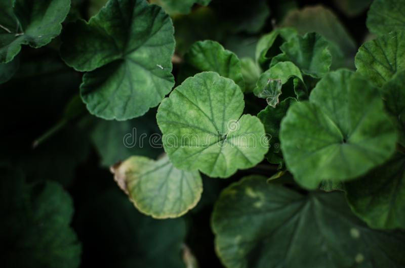 Stem and leaves stock photography