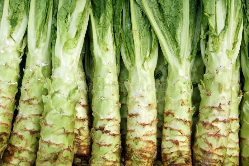 Download Stem lettuce stock image. Image of leaf, greenstuffs - 29668563