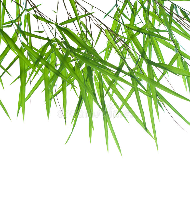 Download Stems Of Beautiful Green Bamboo Leaves Stock Image - Image: 15012083