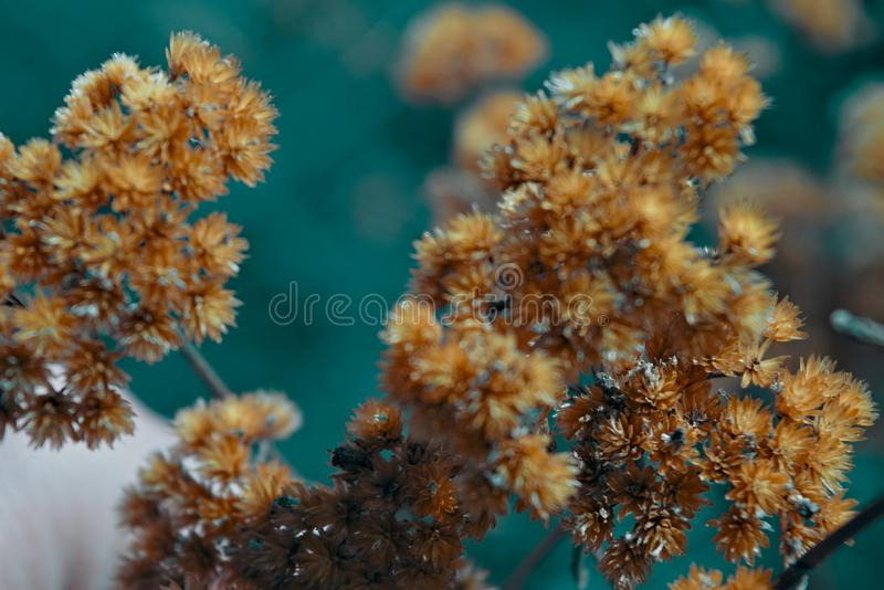 Stems of dried plants on a blurred background stock image