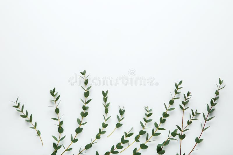 Stems with green leafs stock images