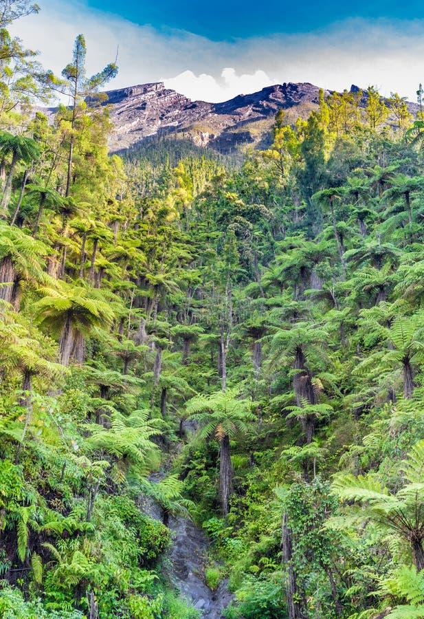 Stenöverkanten av vulkan Agung och det vita molnet kommer från krater, med busksnår av en jätte- ormbunke på foten av berget arkivfoto