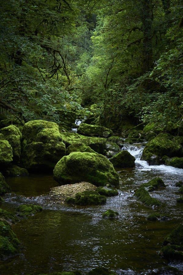 Sten för flodskogmossa royaltyfria bilder