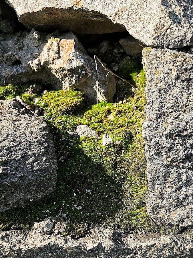 Sten grön mossa, sommar, vår arkivbilder