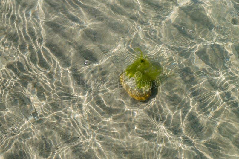 Sten med algen på den sandiga botten av havet royaltyfria foton