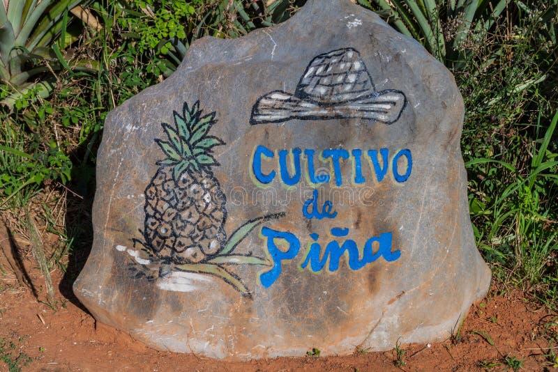 Sten med en inskrift: Cultivo av Pina Growing av en ananas som markerar ett ananasfält cuba dalvinales royaltyfria foton
