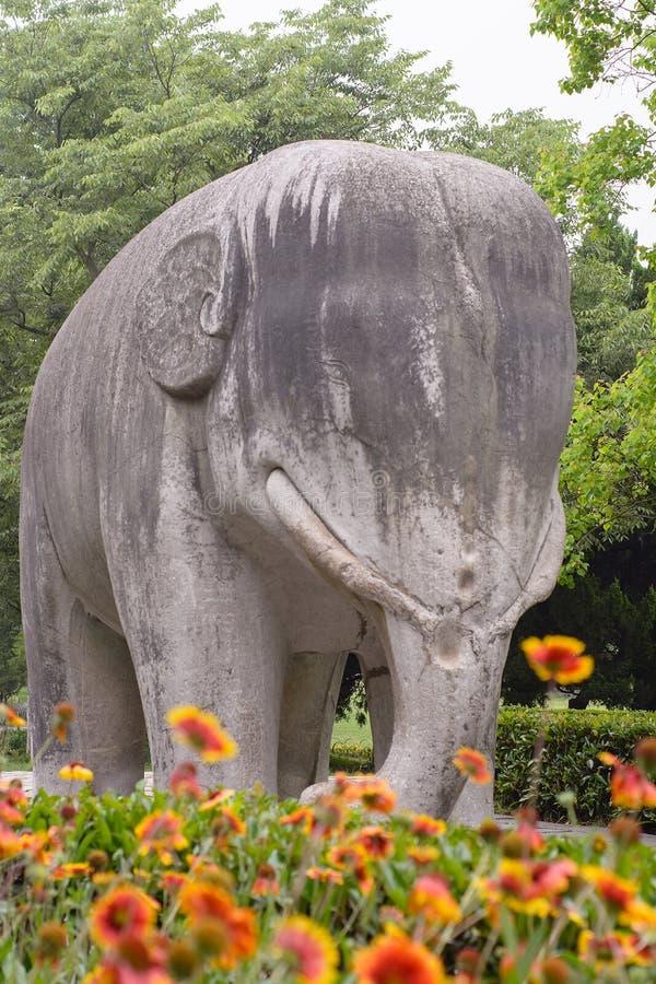 Stena elefanten royaltyfri fotografi